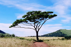 It is a scene where one tree stands